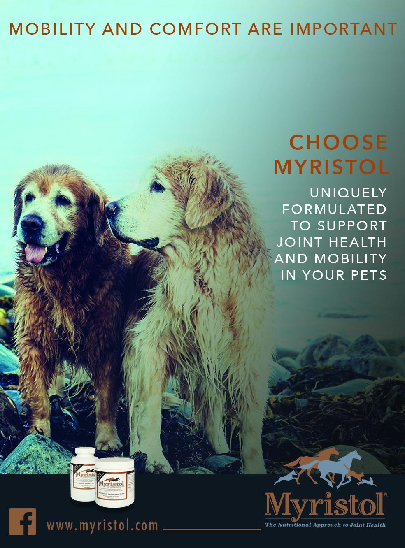 Myristol Spotted Donkey Branding Dog Ad