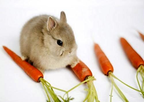 Bunny-carrots.jpg