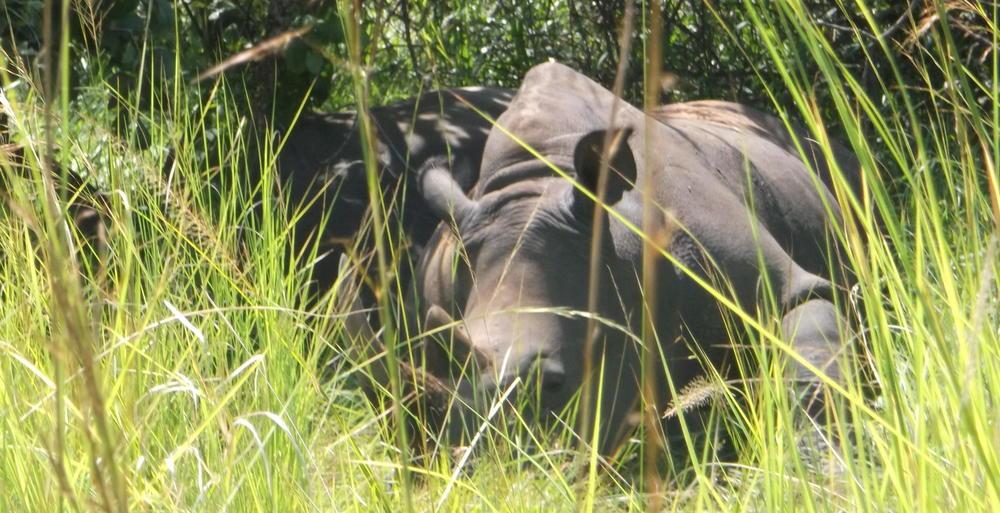 ©FlygaTwigaLLC Rhino Sanctuary Uganda