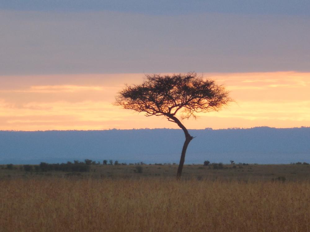 Acacia Tree Kenya 2014 ©Flyga Twiga LLC