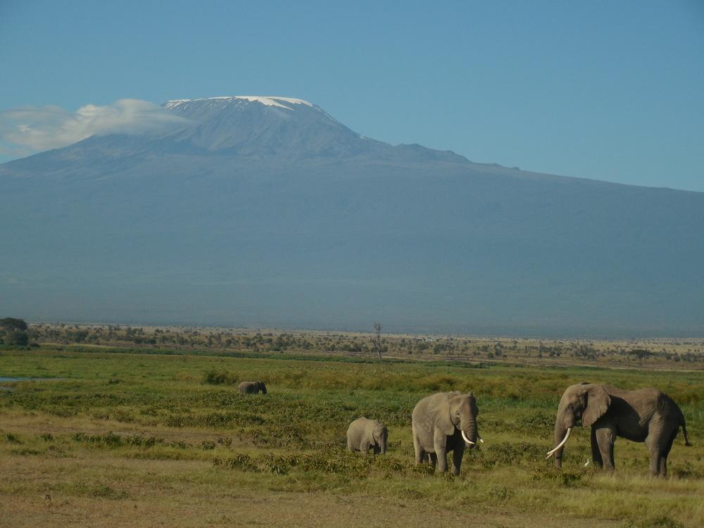 Kenya Elephants at Amboseli 2014 © Flyga Twiga LLC