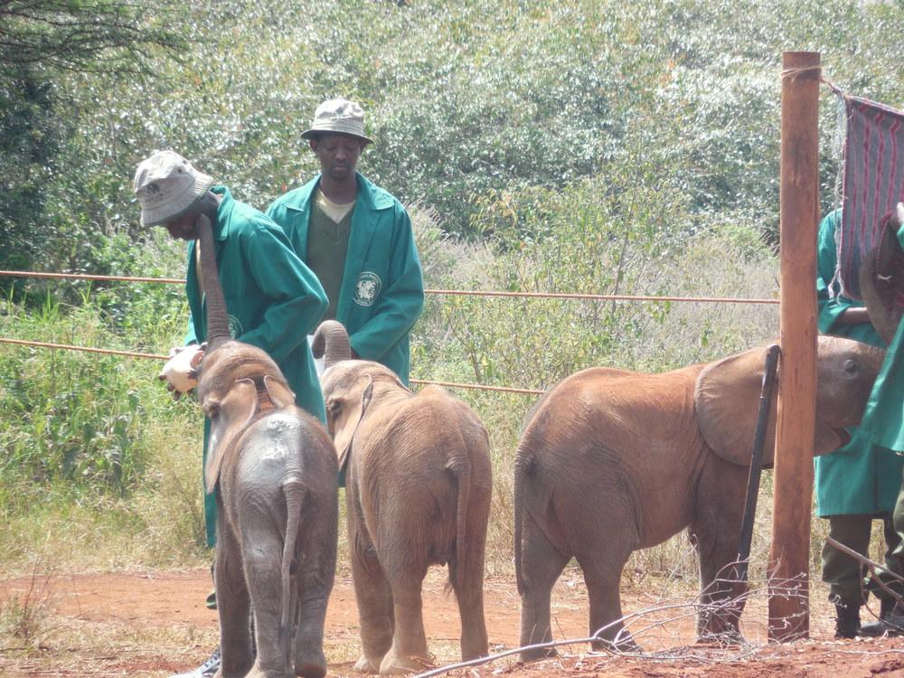 DavidSheldrickTrust_Kenya2014©FlygaTwigaLLC