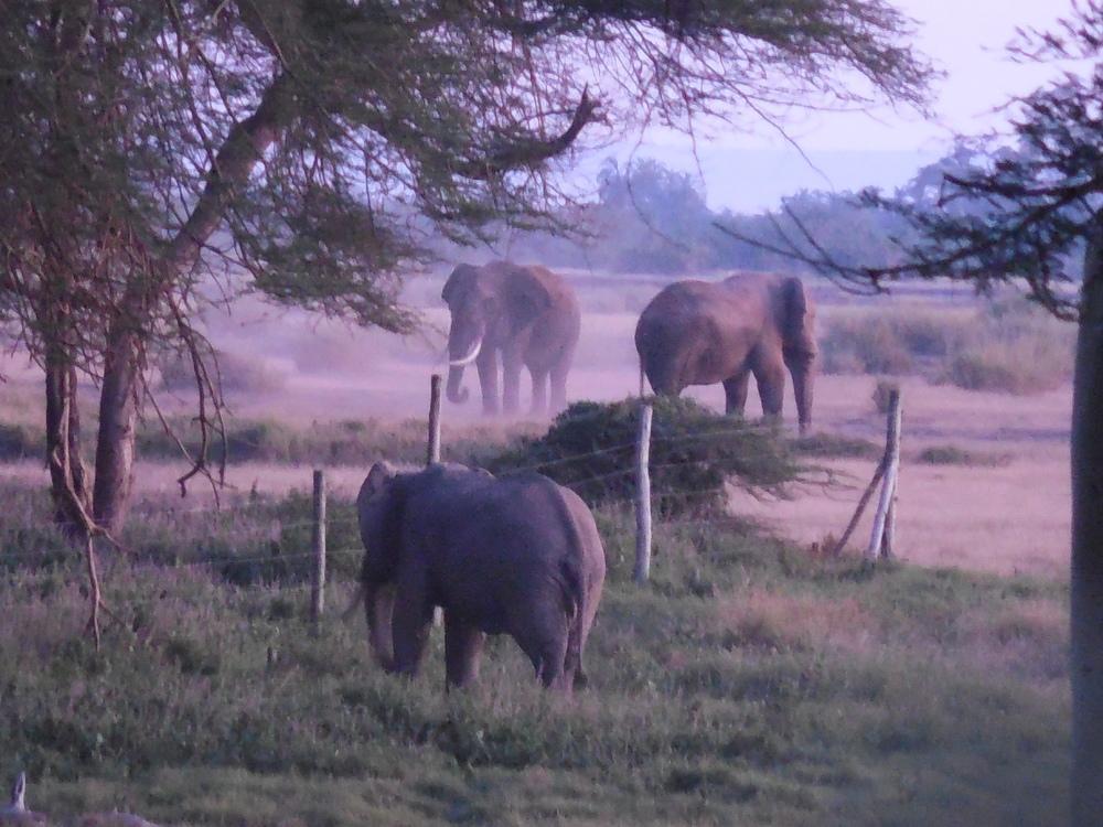 AmboseliMornngKenya2014©FlygaTwigaLLC