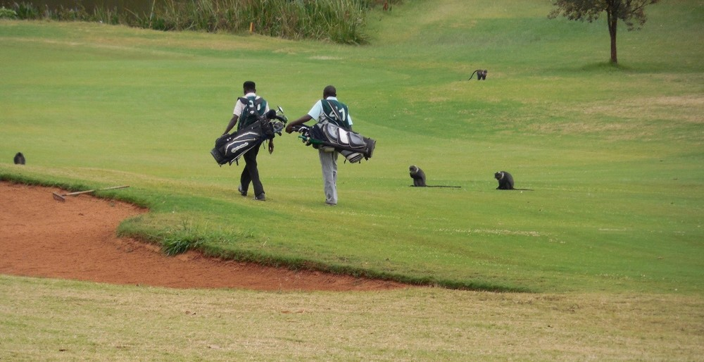 Caddies & Monkeys, Windsor Golf Hotel & Country Club, Nairobi, Kenya ©Flyga Twiga LLC