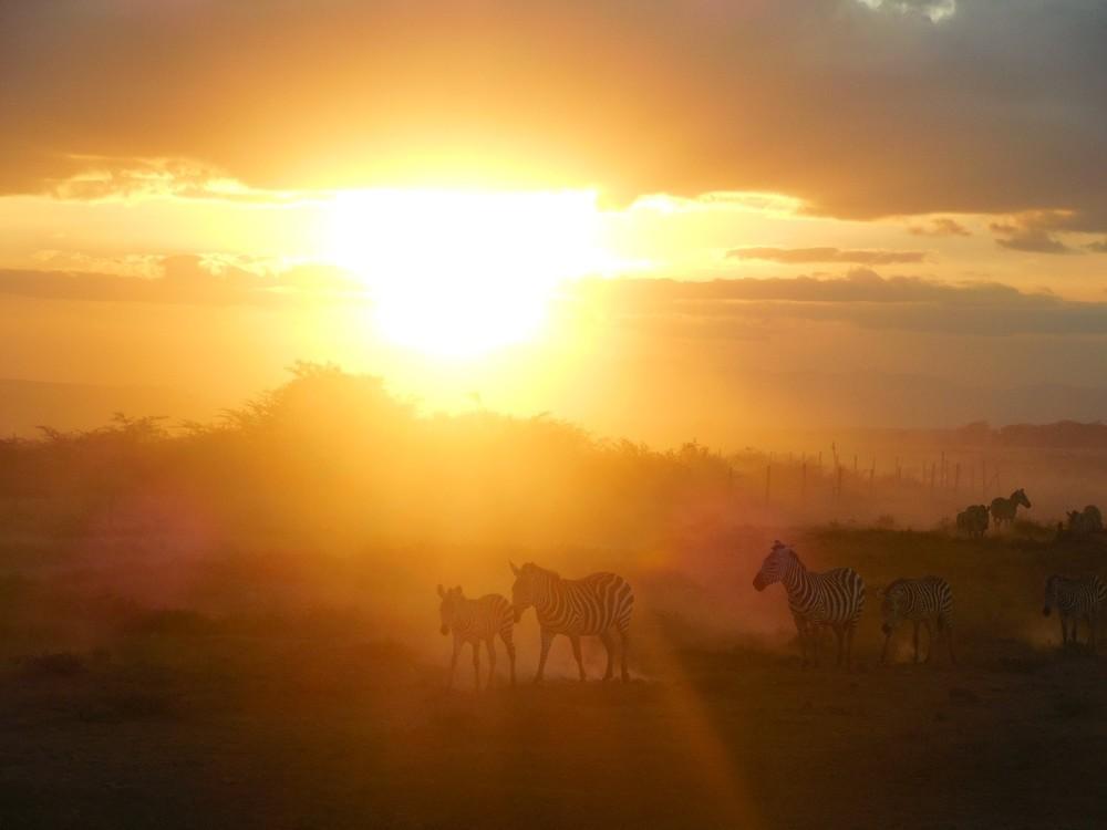 Sunset & Zebra Evening Migration, Amboseli National Park, Kenya ©Flyga Twiga LLC