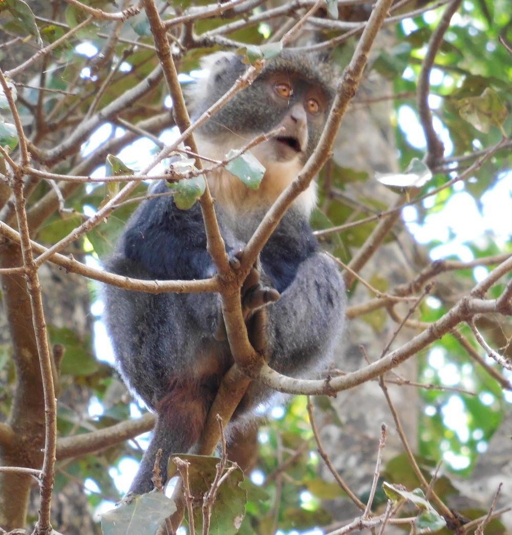 Monkey Kenya 2015 ©Flyga Twiga LLC