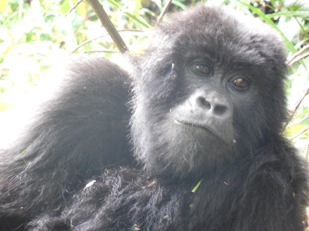 Mgahinga Gorilla National Park, Uganda © Flyga Twiga LLC