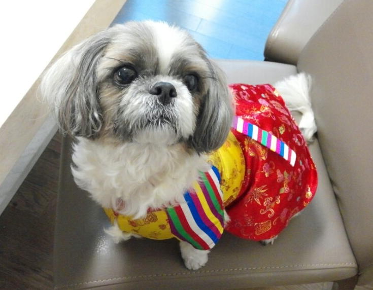 Dog in Traditional Korean Hanbok, Seoul, South Korea Credit: Yeojeong Kim