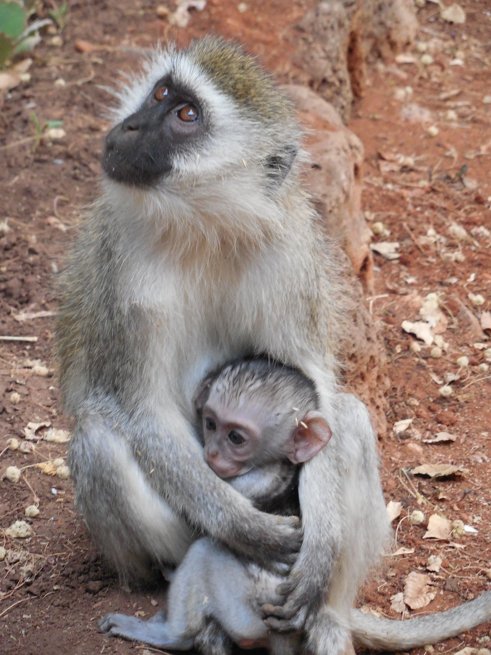 Monkey and Baby ©Flyga Twiga LLC