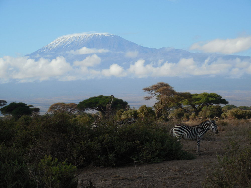 Kilimanjaro & Zebras, Amboseli National Park, Kenya ©Flyga Twiga LLC