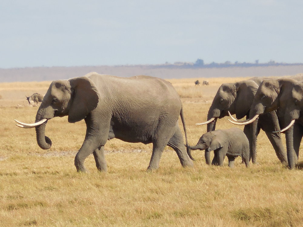 Amboseli Elephant Family, Kenya ©Flyga Twiga LLC