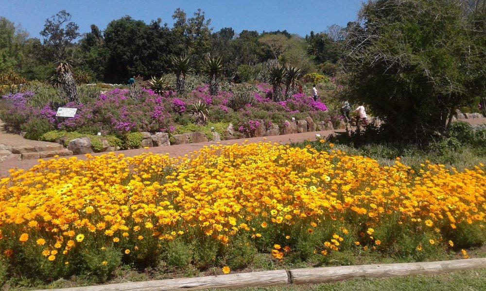 Kirstenbosch National Botanical Gardens ©Michael English
