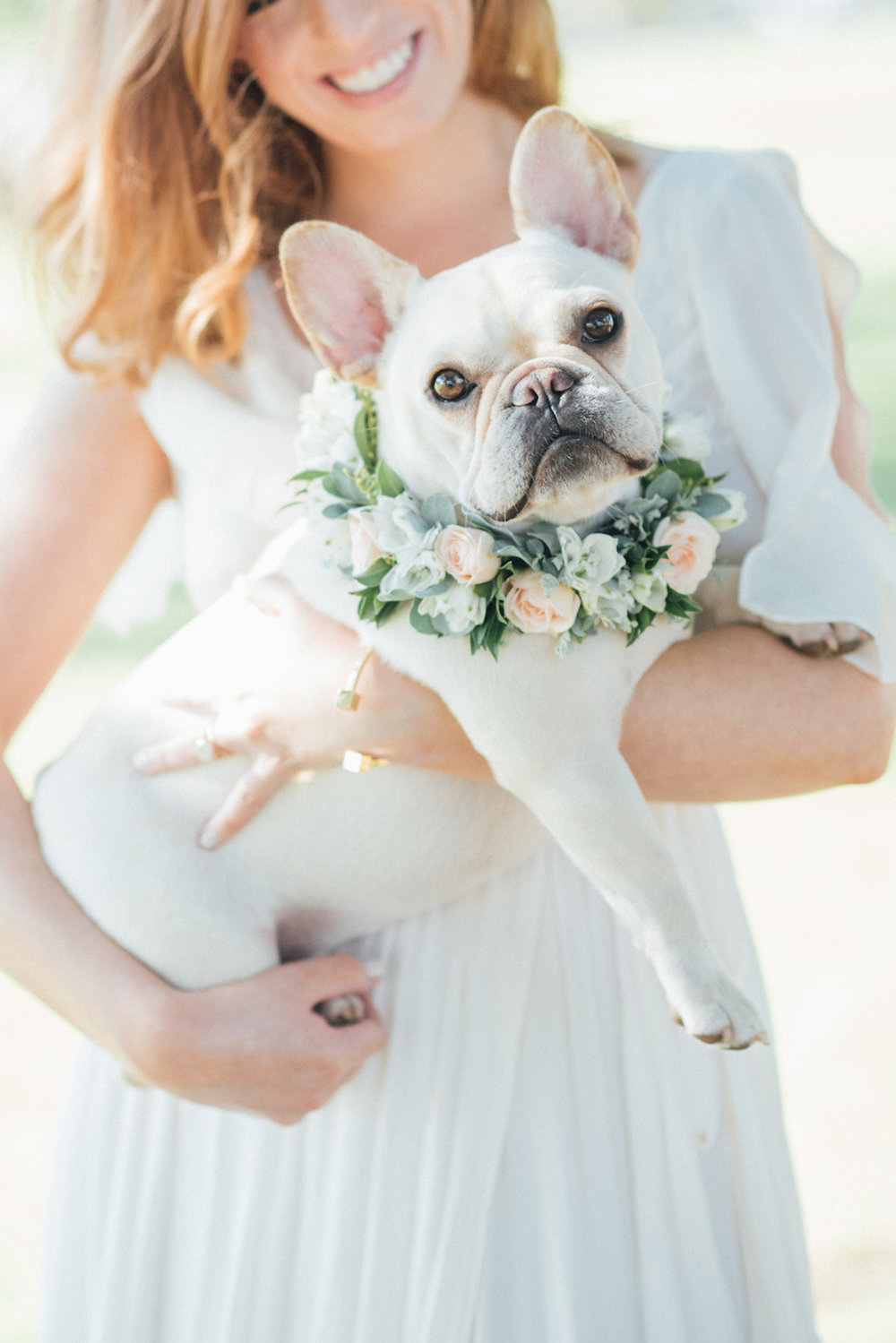 Cream French Bulldogs wearing flower collars by San Diego florist, Compass Floral // Eva Lin Photography