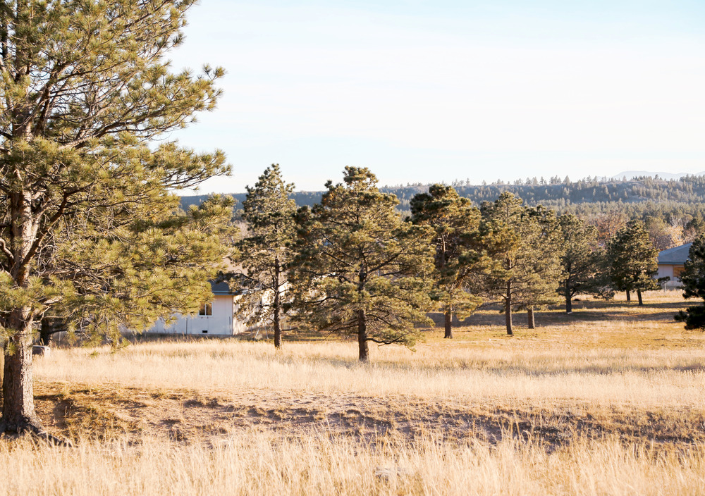 That open field was my backyard.  My window is covered by a pine tree, but it was in that white house with the blue trim in the left.  Everyone had so much yard pride back when we lived there!  It always looks dead in the fall in Colorado at that elevation, but I remember our green plush yards in the summer.  This is the house the deer would come to feed at my window growing up.  They would graze on grass and from the pines, and come to my window for treats.  Coyotes, Mountain Lions, Bears, Deer, Foxes, and Wild Turkeys shared their neighborhood with all of us who lived around here.