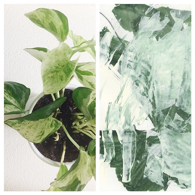 I'm totally inspired by my #houseplants and have been painting these abstract studies for weeks now. The plant is called a #manjulapothos and it has beautiful variegated leaves. The image on the right is a detail shot of one of the #abstractstudy - can't wait to share more soon! • #abstractexpression #abstractpaintings #greenart #abstract_art #seattleartist #worksonpaper #markmaking #natureinspired