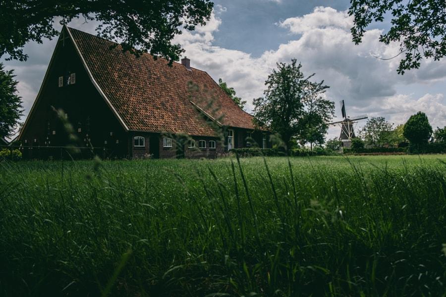 Dutch farm and windmill
