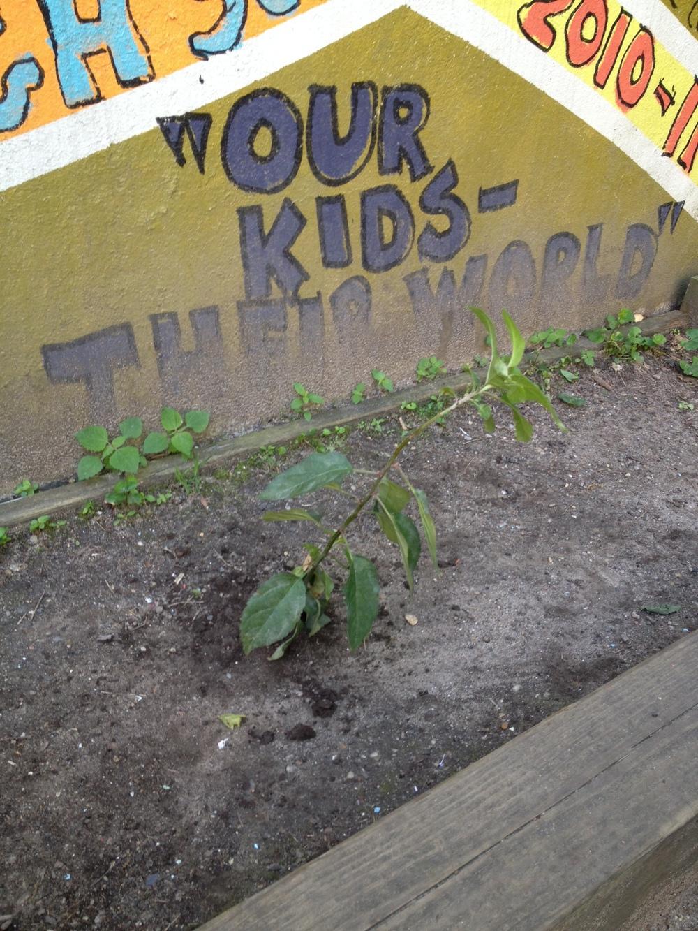 Laurel's Kindergarten Class