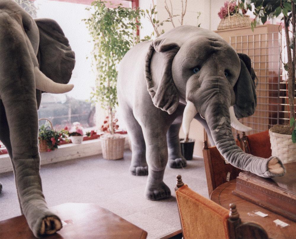 2200px-11-elephantspage.jpg