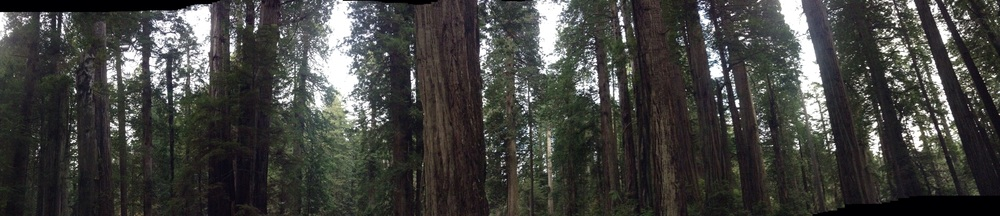 Facing the Redwood Curtain