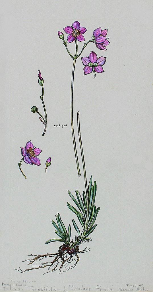 Fame Flower