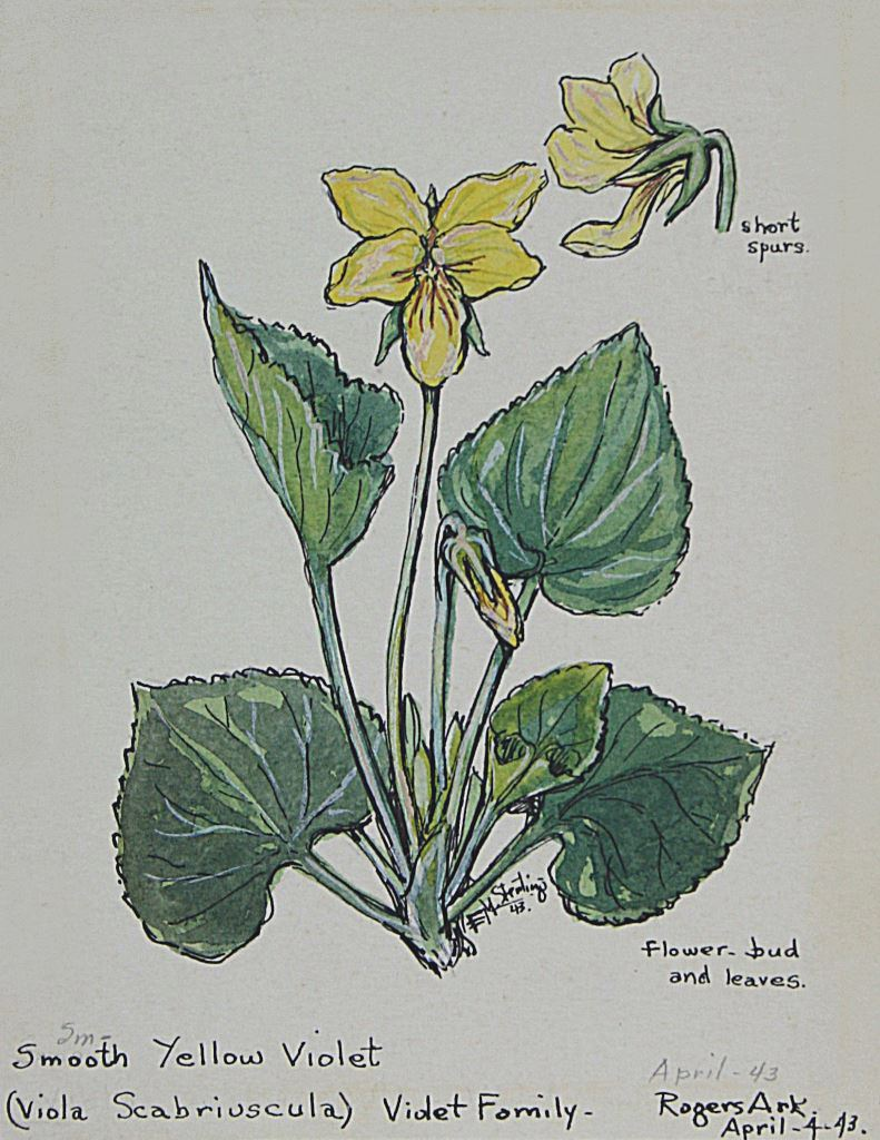 Smooth Yellow Violet