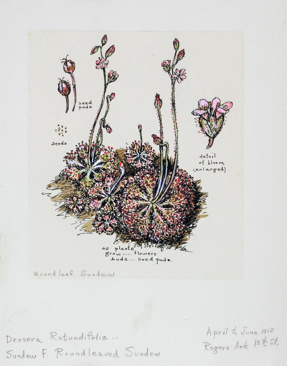 Maple Root & Trunk Fungi