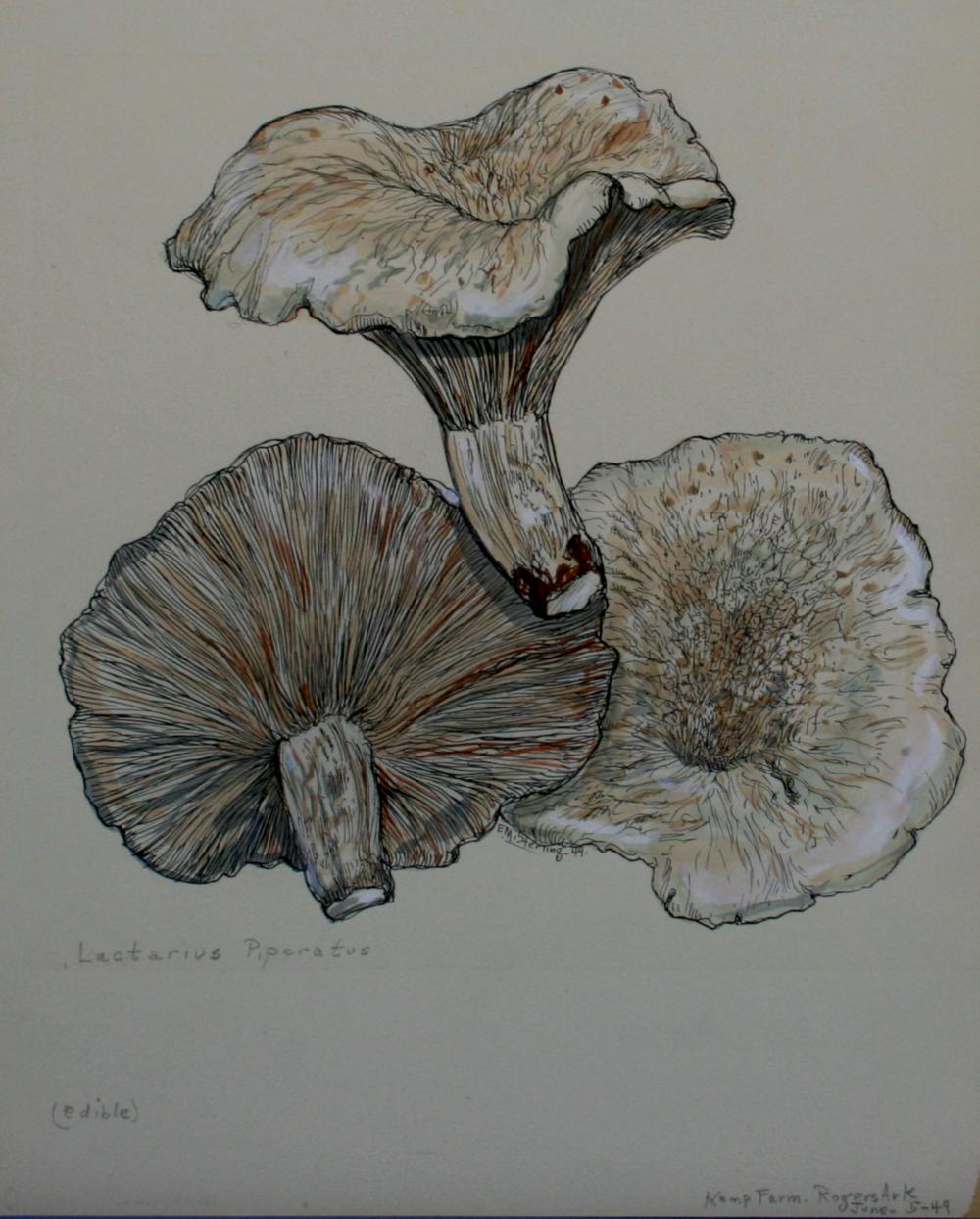 Peppery Milk-Cap Mushroom
