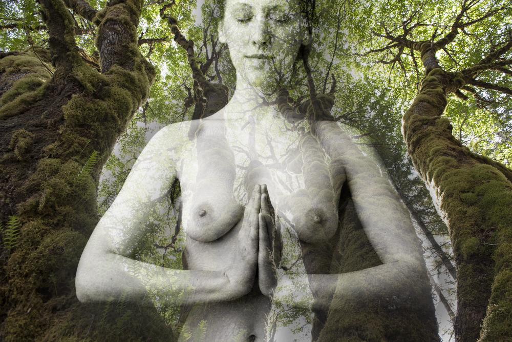 Namaste Trees