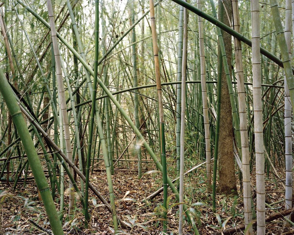 Bamboo_20x25.jpg