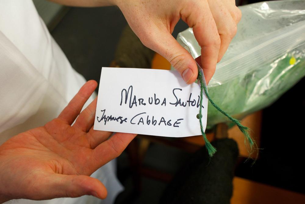 Saison-San-Francisco-Joshua-Skenes-shows-Japanese-Cabbage.jpg