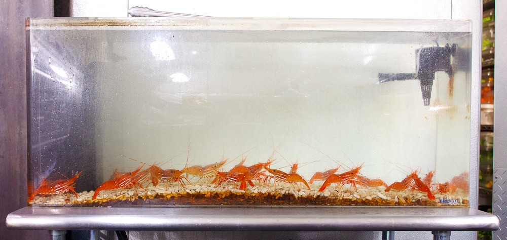 Saison-San-Francisco-Saltwater-tank-of-live-local-prawns.jpg