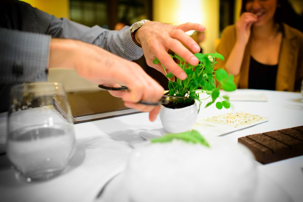 Cutting pea shoots