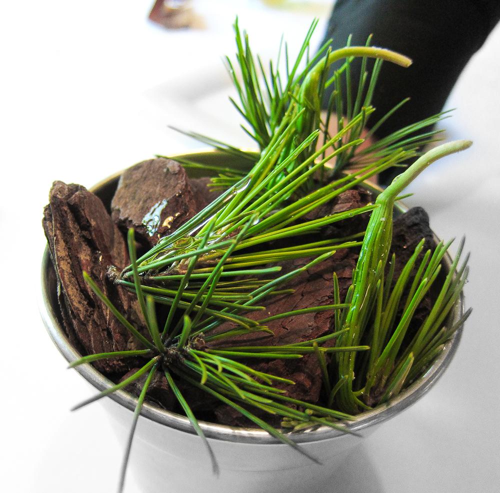 El Bulli - Pine Needles