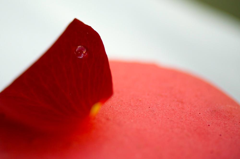 Ispahan - biscuit macaron à la rose, crème aux pétales de rose, framboises entières, letchis tear