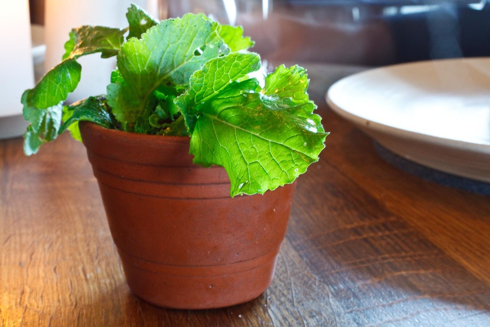Noma - Amuse bouche - Radish and turnip, soil and herbs, the plant