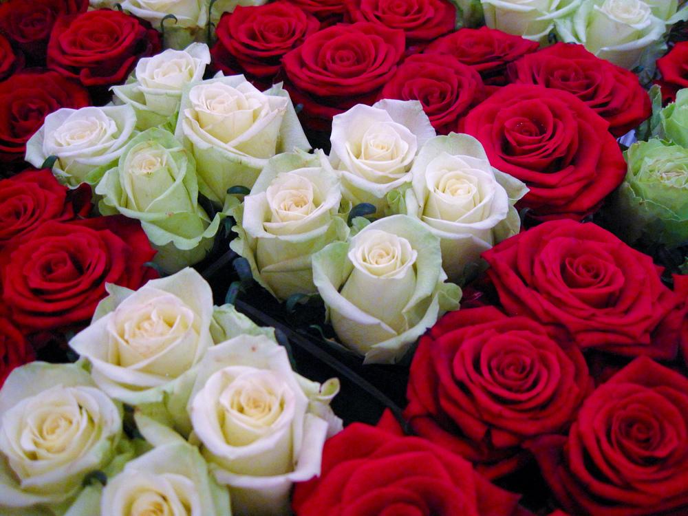 Le Bristol - Les Fleurs