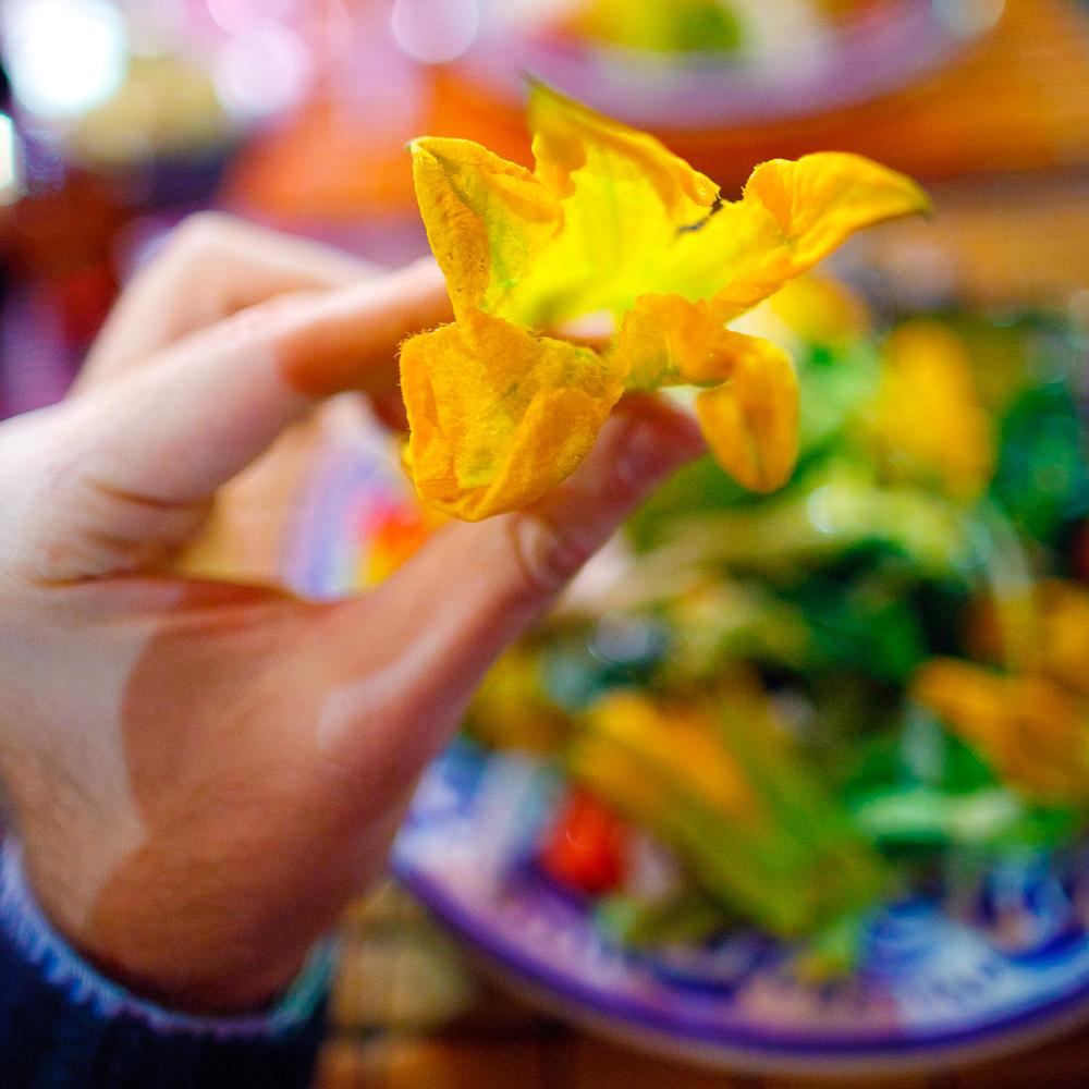 Una flor de calabaza (A squash blossom)