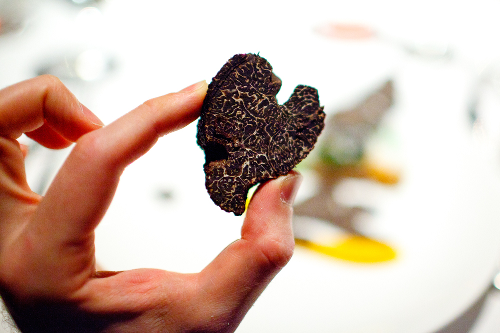 American Perigord-style black truffle, from just outside Knoxville Tennessee