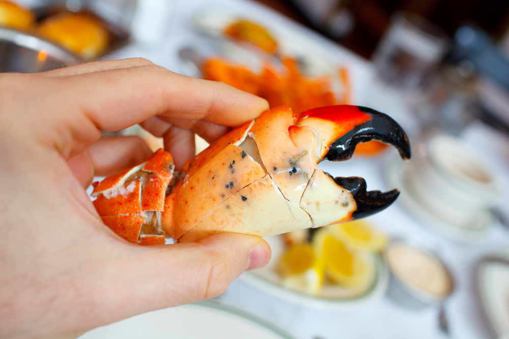 Jumbo stone crab claw