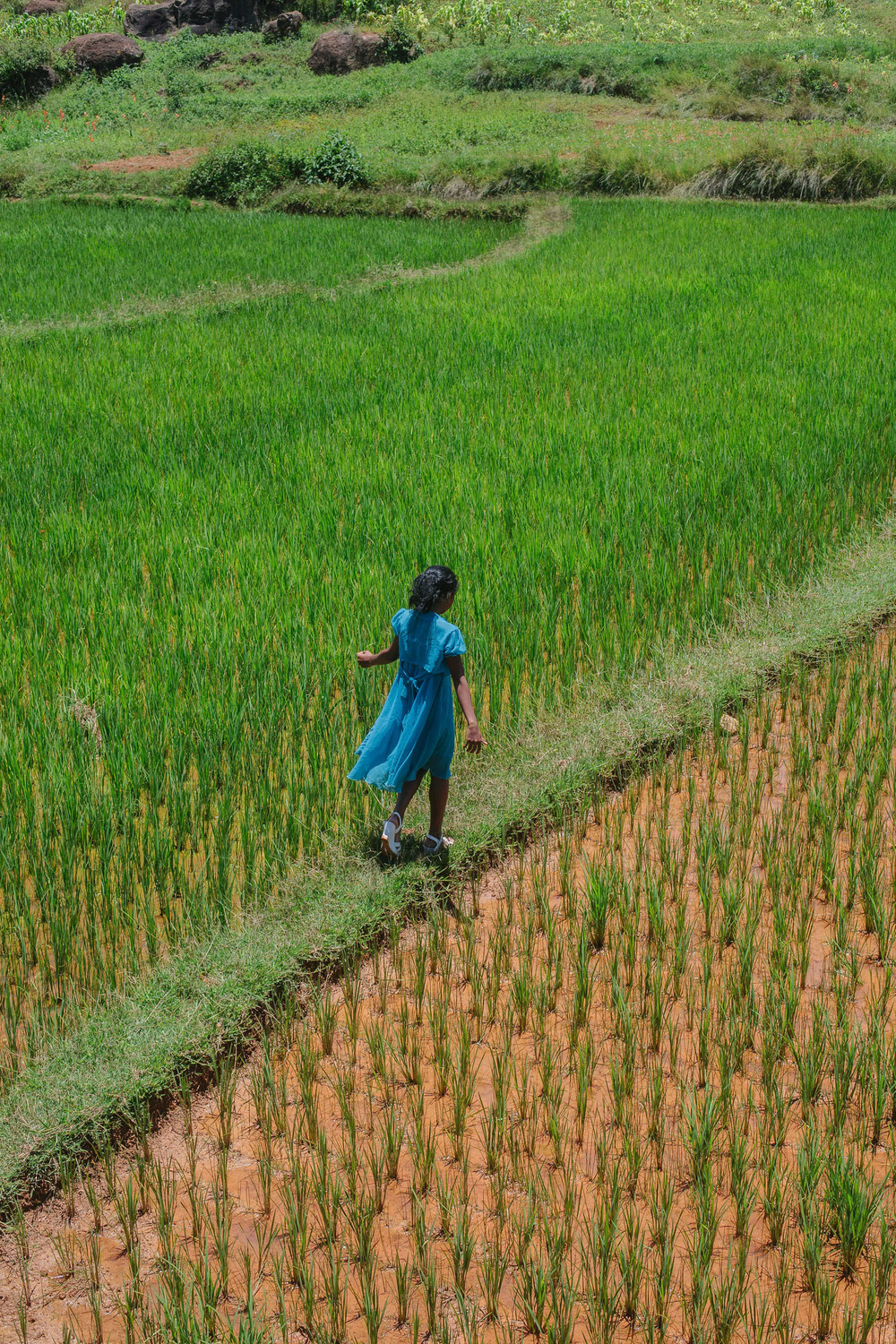 Sitraka walking through the rice fields.