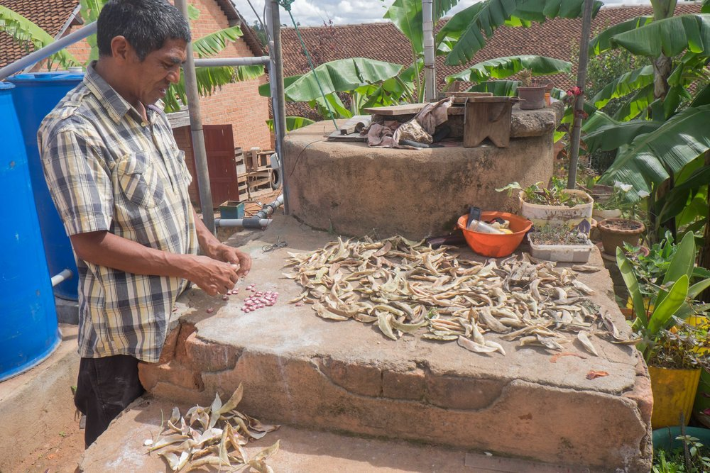 Faly shucking beans, to share with his village