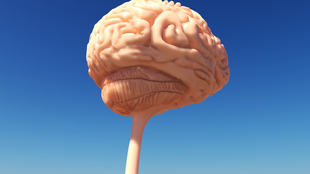 Brain WIP 11.jpeg