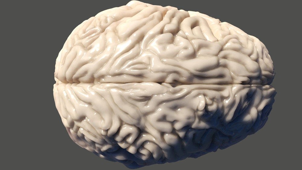 Brain WIP 15.jpeg