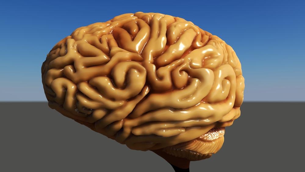 Brain WIP 16.jpeg