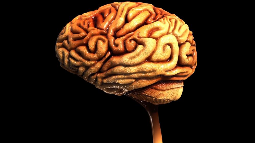 Brain WIP 18.jpeg