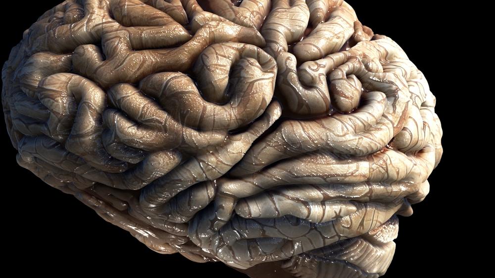 Brain WIP 19.jpeg