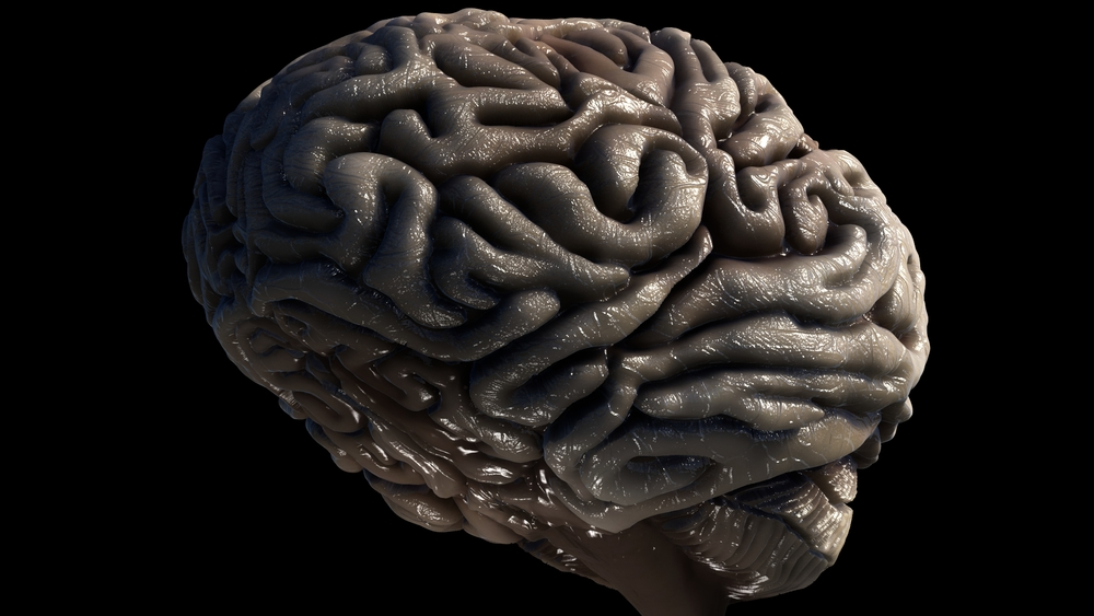 Brain WIP 20.jpeg