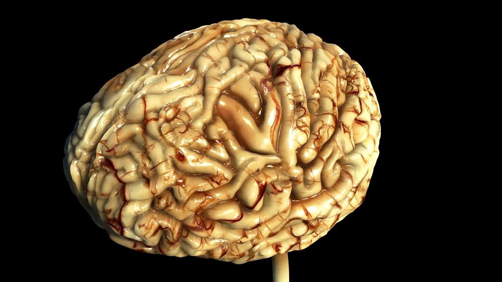 Brain WIP 21.jpeg