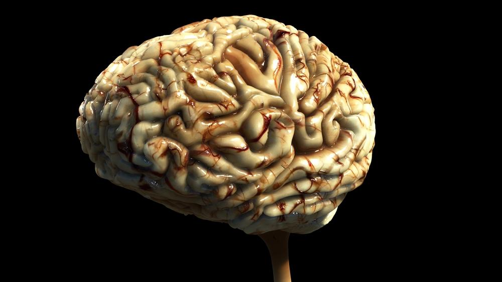Brain WIP 22.jpeg