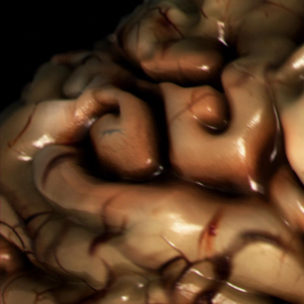 brainPorthole.png